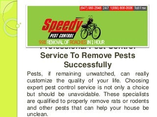 Professional Pest Control Service To Remove Pests Successfully