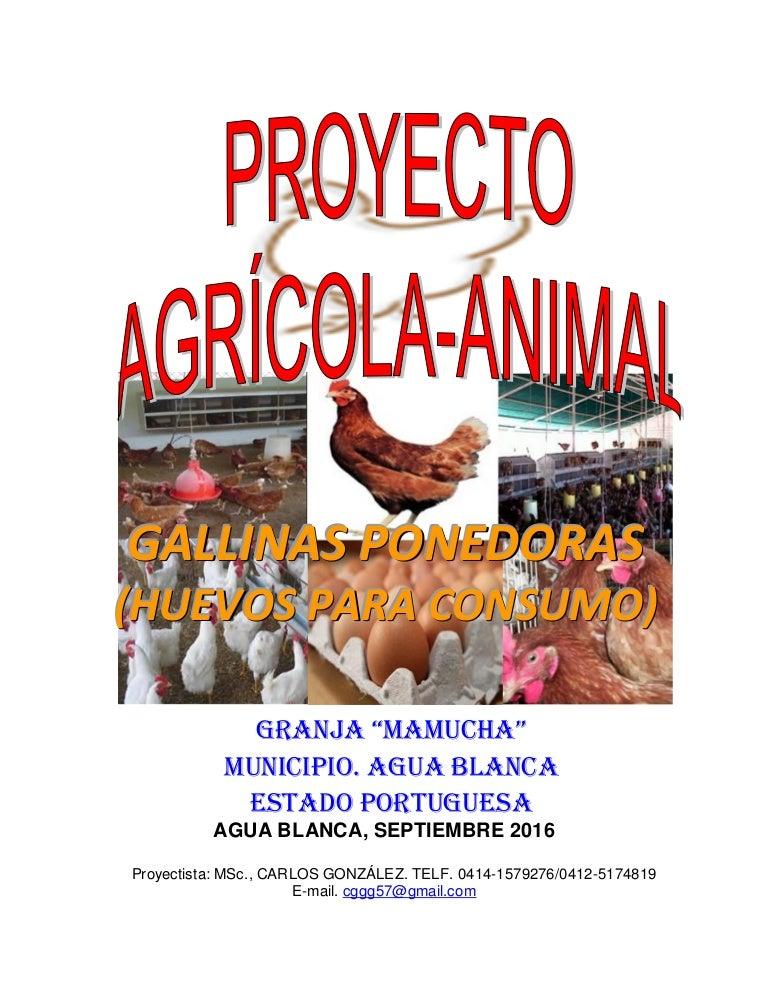 Proyecto gallinas ponedoras postura granja mamucha sep for Como hacer una granja de peces