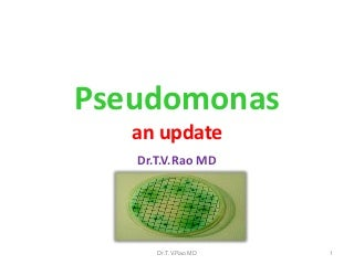 Pseudomonas an update