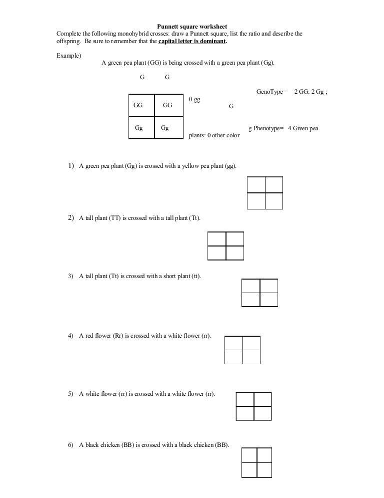 Punnett Square Worksheet – Heredity Worksheets