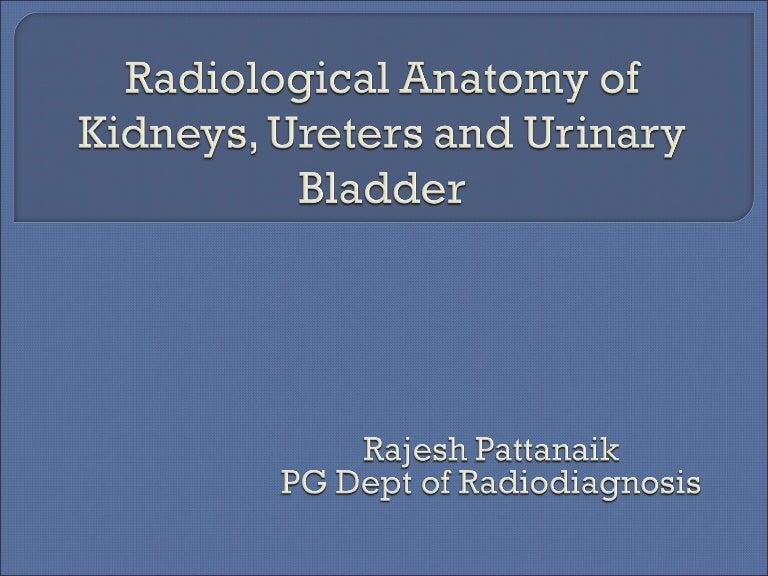 Radiological Anatomy Of Kidney Ureter Bladder