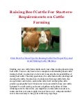 Raising Beef Cattle For Starters- Requirements on Cattle Farming