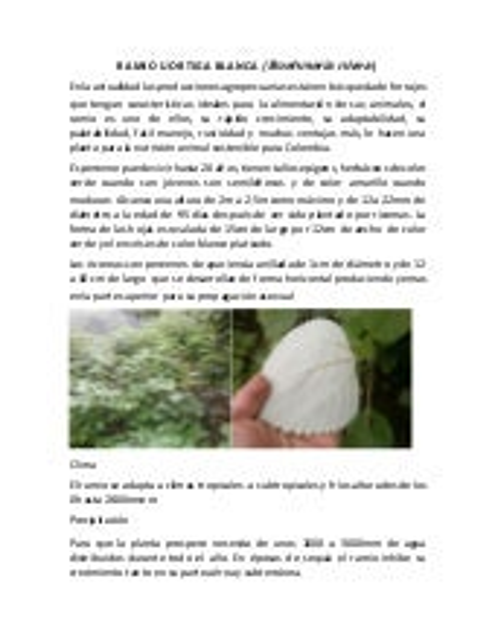 Reproducciòn De Morera Colombia