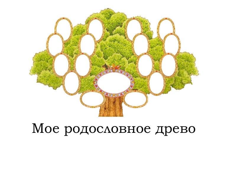 проект генеалогическое древо картинки хранения специй