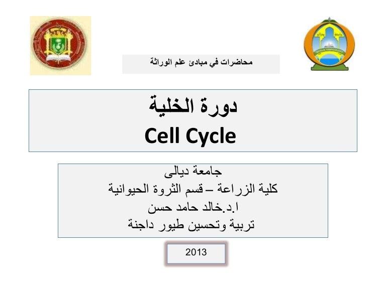 خلال تتضاعف الخلية الدور في دورة الكروموسومات