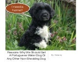 Reasons why we should get a portuguese water dog