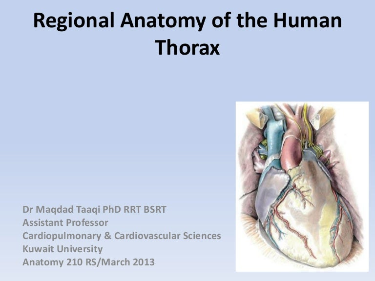Regional Anatomy Of The Human Thorax Rs 2011