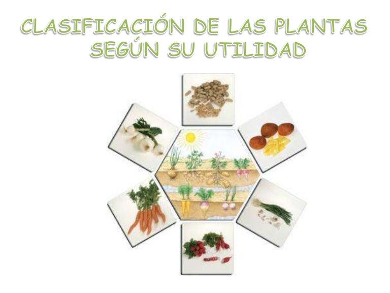 Sara hernandez of plantas ornamentales y medicinales for Utilidad de las plantas ornamentales