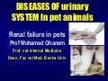 Renal failure in dogs dr ghanem 2018