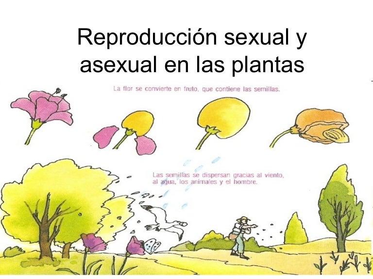 Proceso reproductivo de las plantas asexual