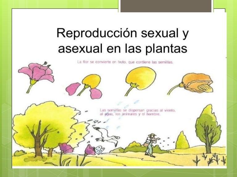 Cuales son las diferentes formas de reproduccion sexual de las plantas