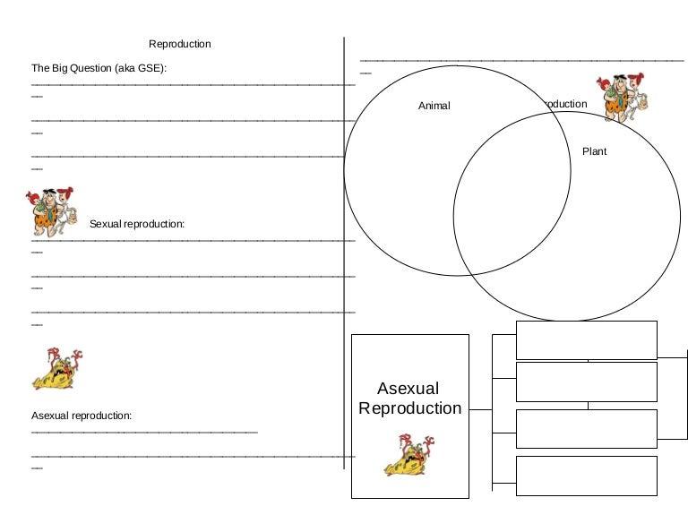 Reproductionworksheetisn 1 – Asexual Reproduction Worksheet