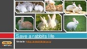 Rescue rabbits for adoption