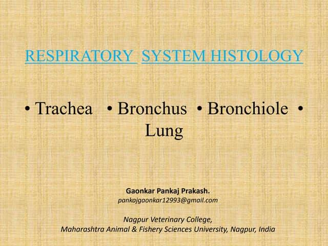 RESPIRATORY  SYSTEM HISTOLOGY