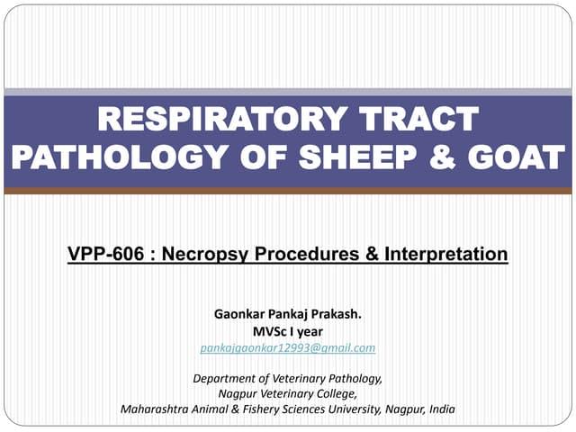 Respiratory pathology of sheep & goat.