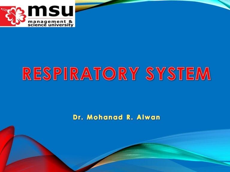 Upper Respiratory System Anatomy