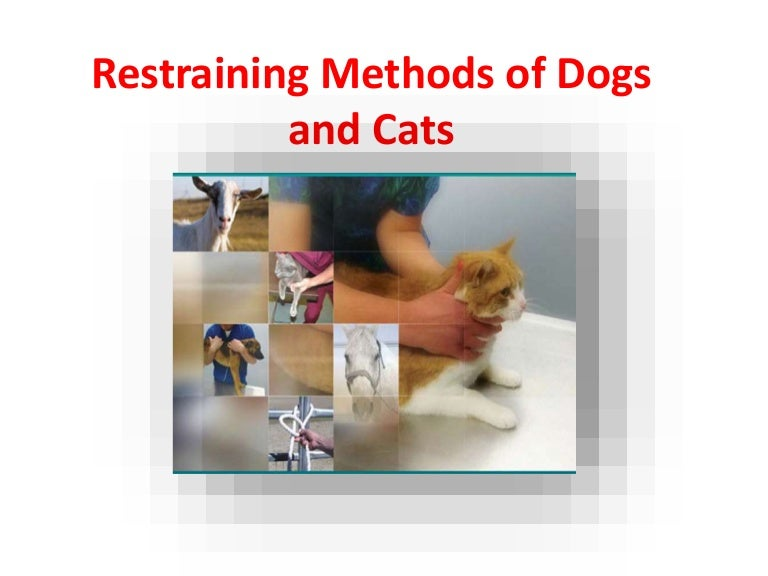 physical restraining methods of dogs and cats, Cephalic Vein