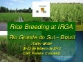 Rice breeding at Irga