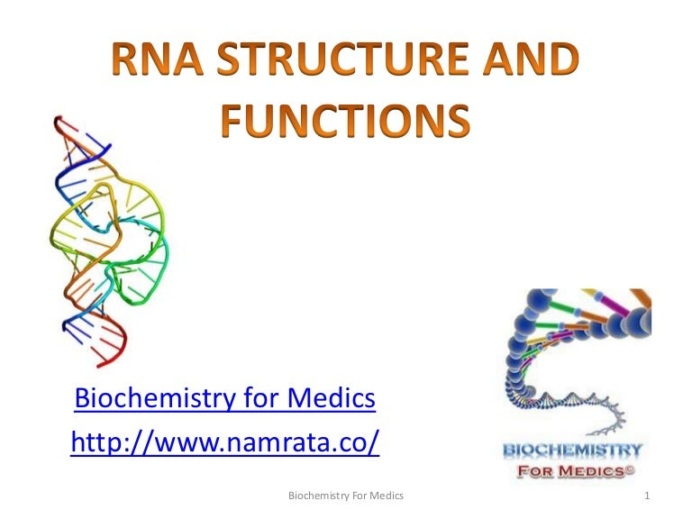 rna structure types and functions rh slideshare net