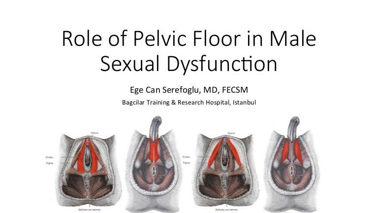 Role Pelvic Floor Male Sexual Dysfunction