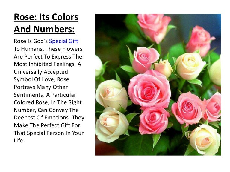 Rose Its Colors And Numbers