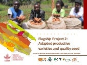 Adapted productive varieties and quality seed - Flagship Project 2 Overview, ISTRC 2018