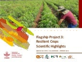 Resilient crops - Flagship Project 3 overview, ISTRC 2018