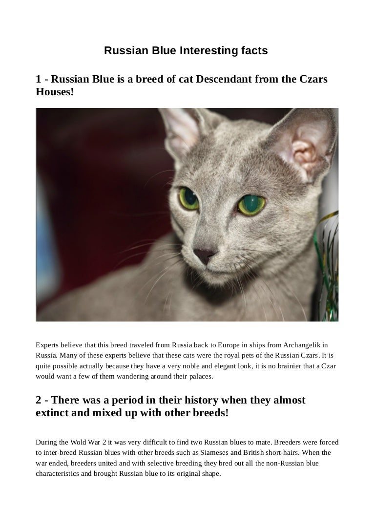 Russian Blue Interesting Facts