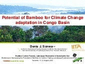Potential of Bamboo for Climate Change adaptation in Congo Basin