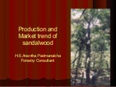 Production and Market trend of Sandalwood