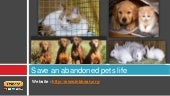 Save an abandoned pets life