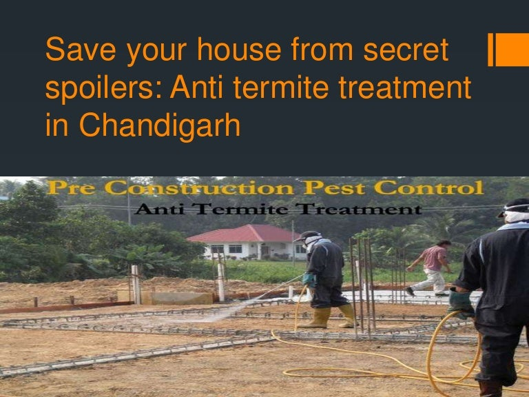 Top 20 Anti Termite Treatment In Chandigarh Tricity Grotal