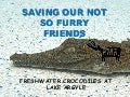 Saving our not so Furry Friends - Long live the freshwater crocodile by Antonia Quinlivan