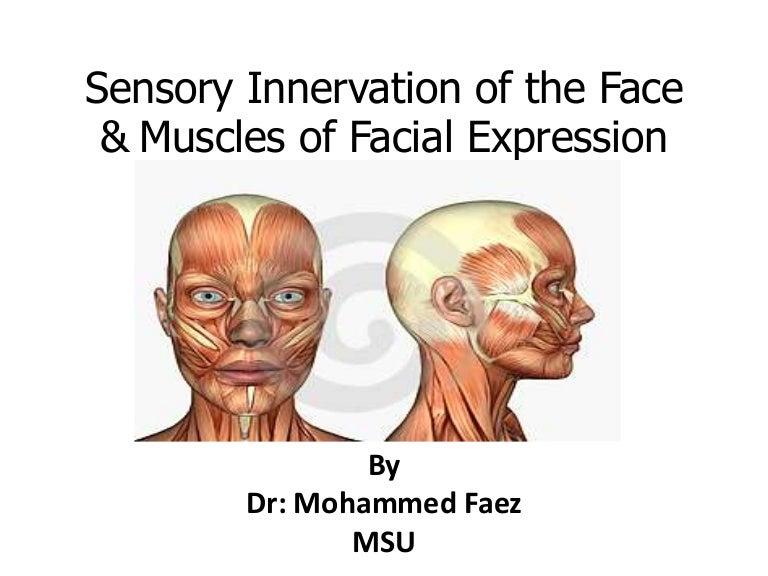 anatomy - Scalp + face
