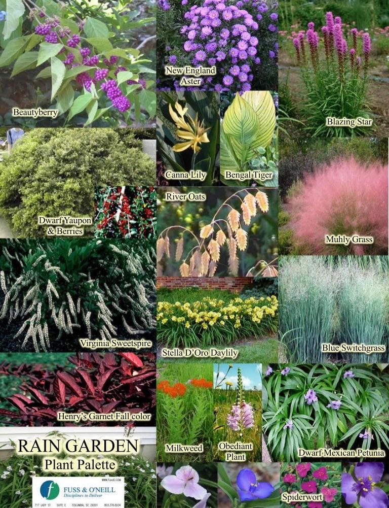 Sc Plants For Your Rain Garden