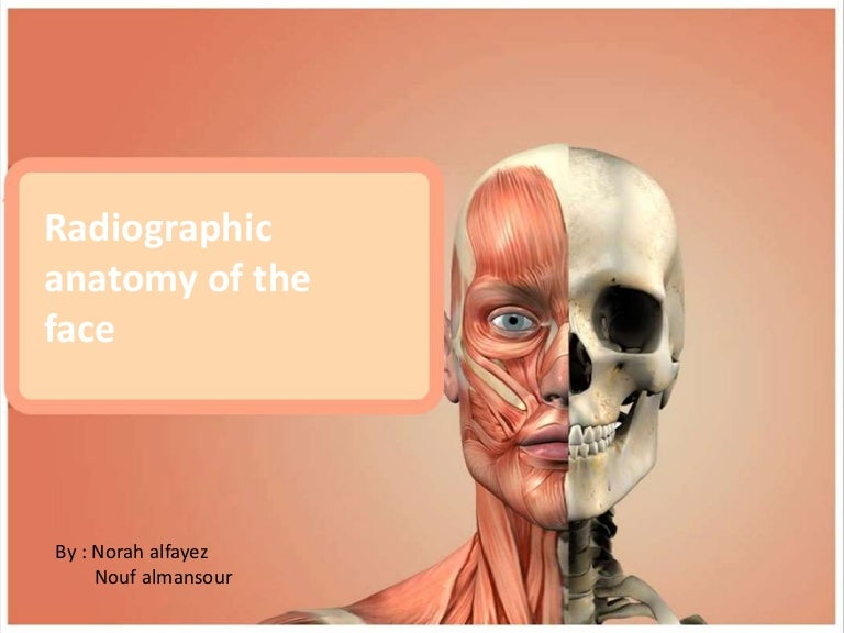 Radiographic Anatomy Of The Face