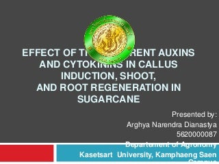 Effect of The Different Auxins and Cytokinins in Callus Induction, Shoot, and Root Regeneration in Sugarcane