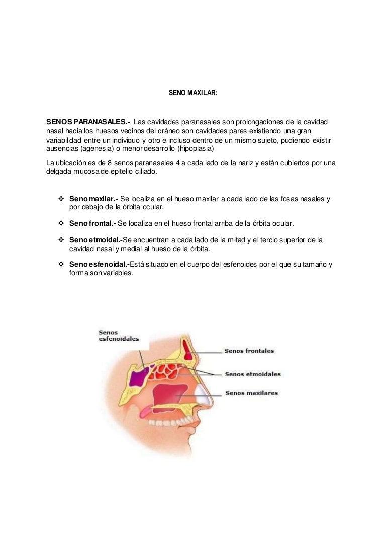 la agenesia del seno esfenoidal destruye