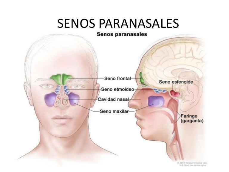 Senos Paranasales Y Exploracion Nerviosa