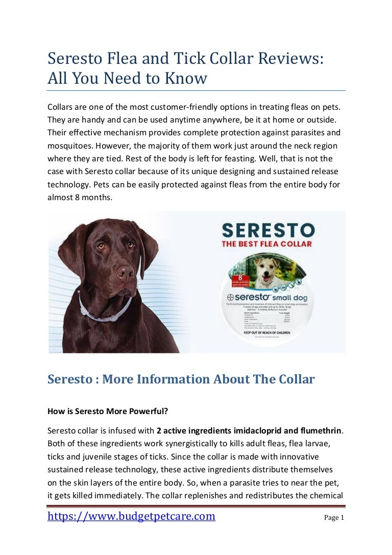 Seresto Flea And Tick Collar Reviews All You Need To Know