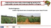 Session 4 improved cassava maize intercropping systems for sustainable cassava and maize production in nigeria by charles chigemezu