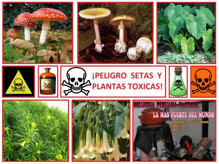 setas y plantas toxicas