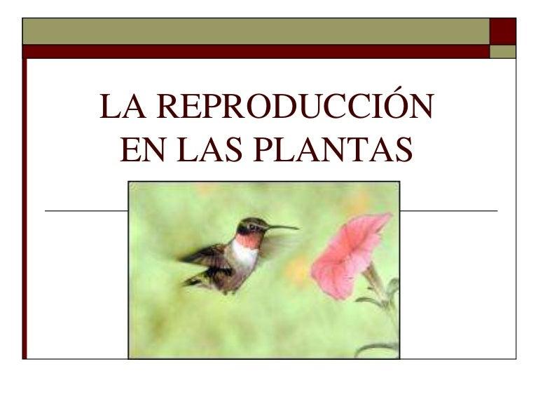 Reproduccion de los helechos asexual and sexual reproduction