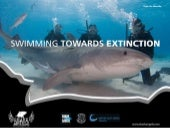 Swimming Towards Extinction: Finning & Other Threats Facing Sharks