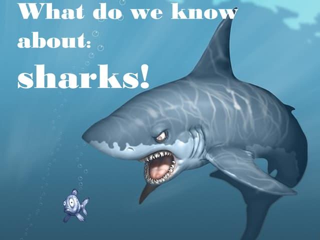 sharks power point, Modern powerpoint