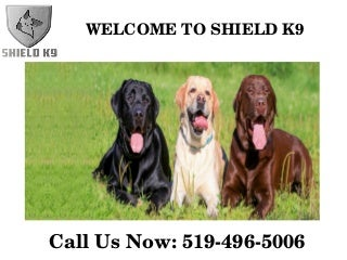 Shield K9 - Dog & Puppy Training - Online Products Store - Kitchener or Waterloo