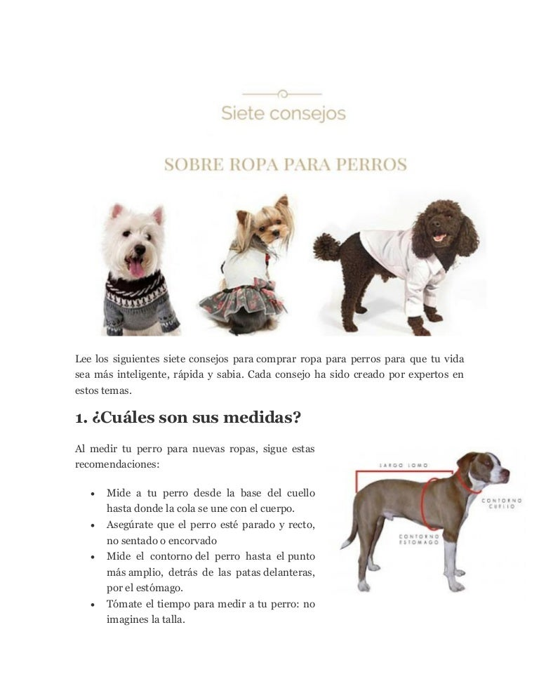 Ropa para Perros para ni/ños para Mantenerse Calientes L SALUTUYA Ropa para Perros peque/ños