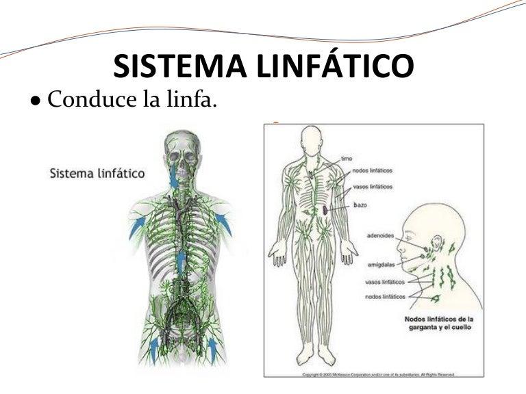 Sistema linfático.