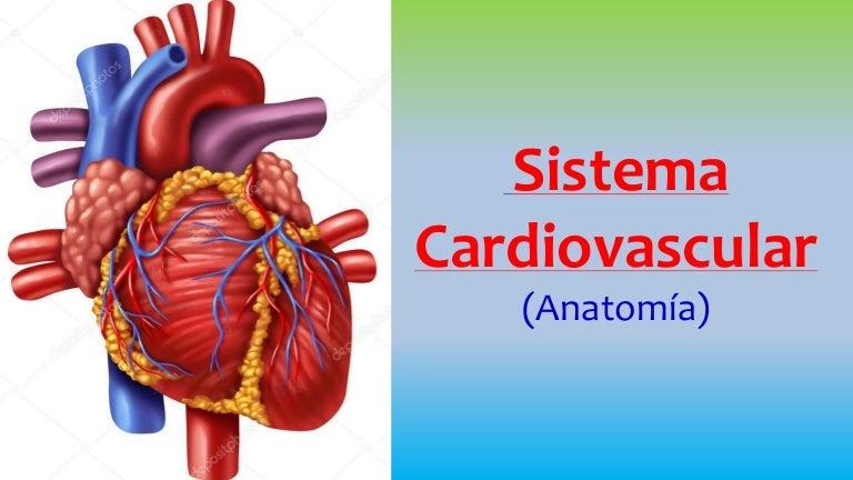 Sistema cardiovascular y linfático (Anatomia Veterinaria)