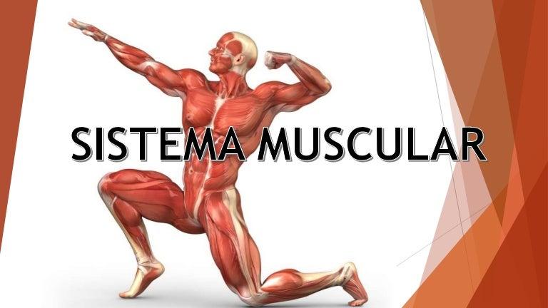 sistema-muscular-160120012435-thumbnail-4.jpg?cb=1453253223